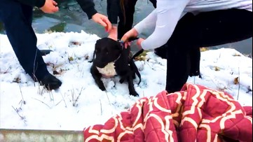 Officer saves dog from icy pond