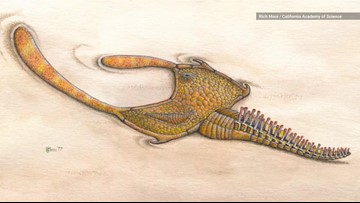 Mystery Creature ID'd From Newly-Discovered Gut Fossils