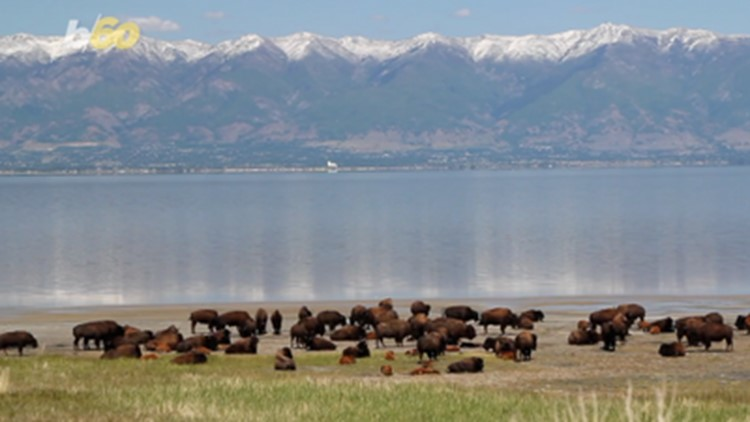 Get Paid to Live and Work in Yellowstone National Park This Fall!