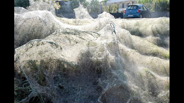 A Giant Spider-Web Covers An Entire Shoreline In Aitoliko, Greece