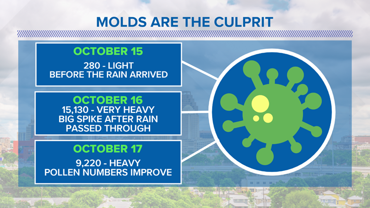 Spike In Molds Likely The Reason For Allergy Struggles