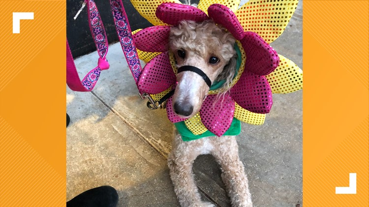 You can sign up for a Halloween costume contest for your dog