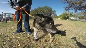 Mission SA: Military dogs pay price for freedom