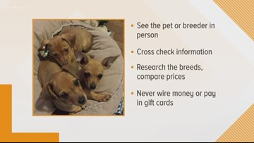 How to avoid puppy buying schemes this holiday season