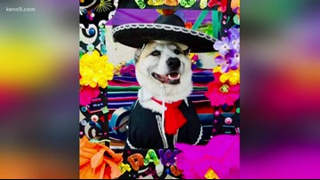 San Antonio hosts Easter celebrations for kids, pets