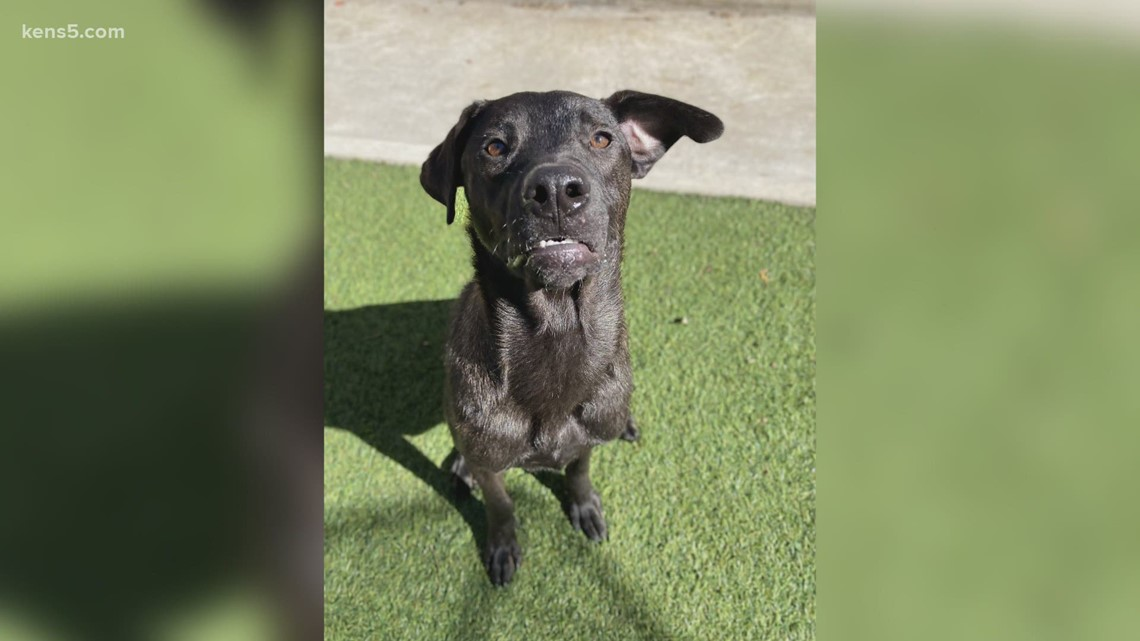 Meet our pet of the week | KENS Cares