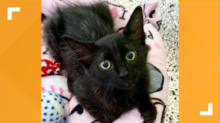 Update: Selena the kitten now up for adoption after being rescued