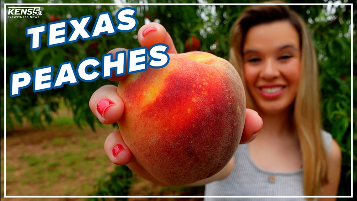 Feeling peachy? Check out this Fredericksburg orchard   Everything 210