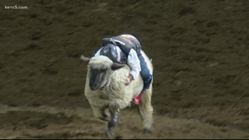 Young SA Rodeo-goer uses 91-point ride to win Thursday's mutton bustin'