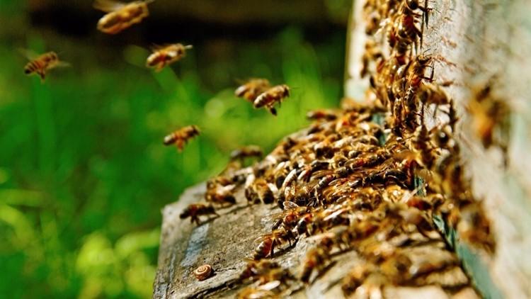 Bees causing a buzz at Universal City park, splash pad ??