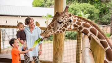 San Antonio Zoo: 'Now, more than ever in our 100-year history, we need help'