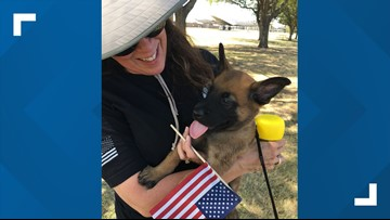 Families foster future military working dogs | Mission SA
