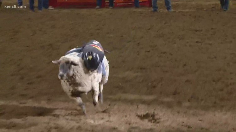Helotes boy ties score record in triumphant Mutton Bustin' ride