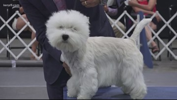 31st Annual River City Cluster of Dog Shows wraps up