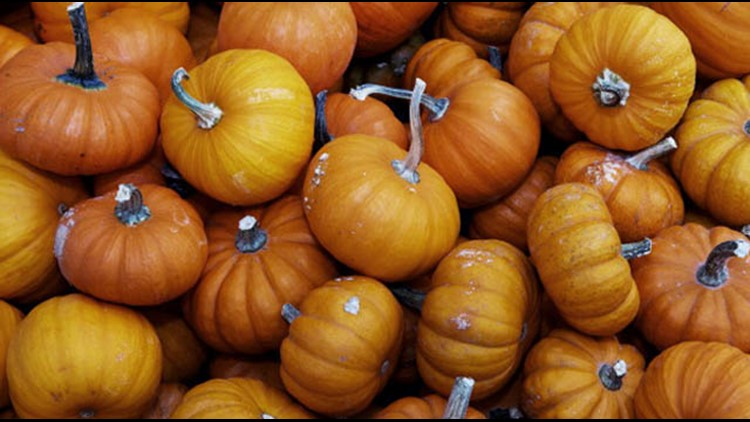 Just in time for fall | Pumpkin patches in the San Antonio area