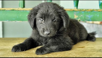 Puppies in San Antonio looking for their fur-ever homes