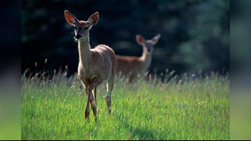 Deer riding in a Prius, naked boaters cited among recent Texas Parks and Wildlife reports