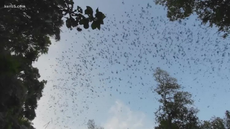You can watch several bats come out at dusk at this state park