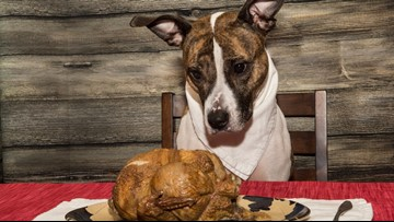 ACS shares tips to keep pets safe during holiday festivities