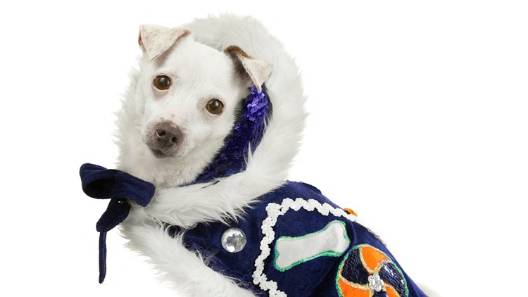 Giving Tuesday: Become 'Fiesta Famous' with the San Antonio Humane Society