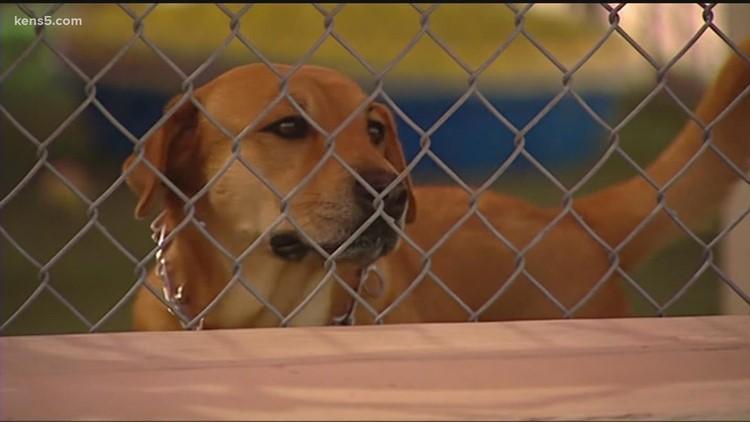 New bill on taking care of outside dogs heading to Gov. Abbott's desk