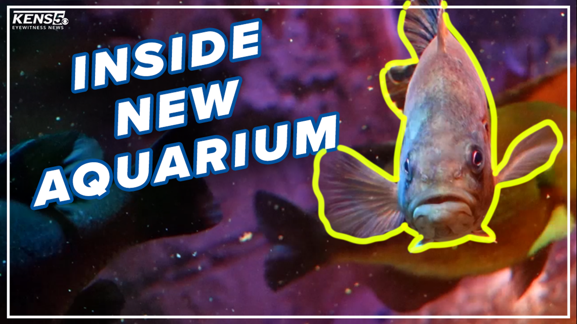 Sneak peek inside new San Antonio aquarium before opening day