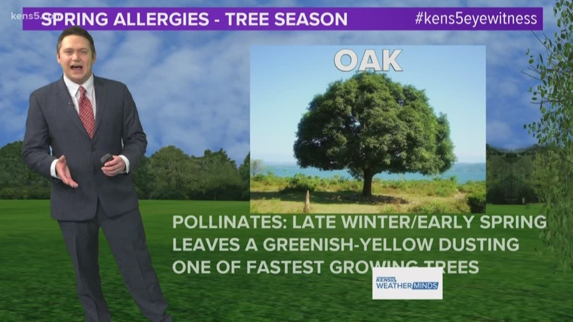 Oak pollen numbers are on the rise, but when is peak season? | Weatherminds