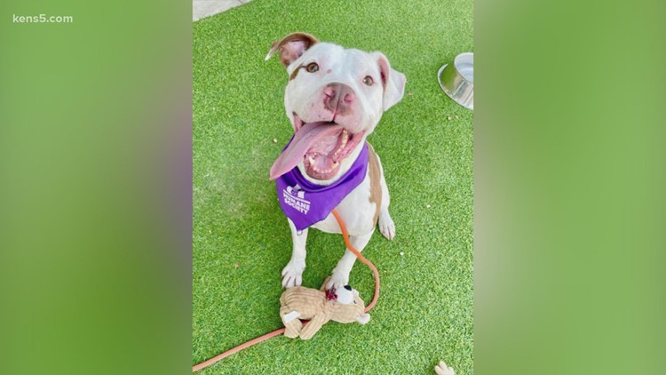 Pet of the week: Meet 'Monster' who is a rescue dog evacuated due to Hurricane Ida