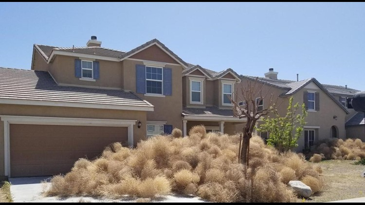 Giant tumbleweeds are causing giant headaches for this SoCal town