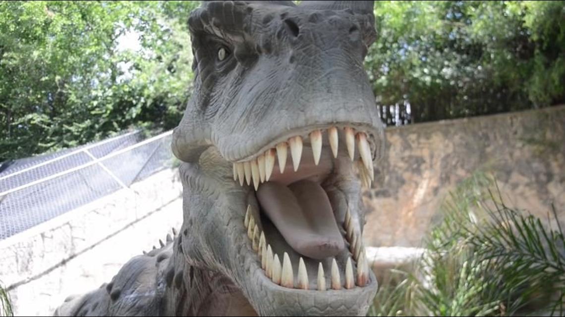 Zoorassic Park Brings Dinosaurs To Life At Sa Zoo Kens5 Com