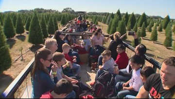 Texas Outdoors: Devine Acres Christmas Tree Farm
