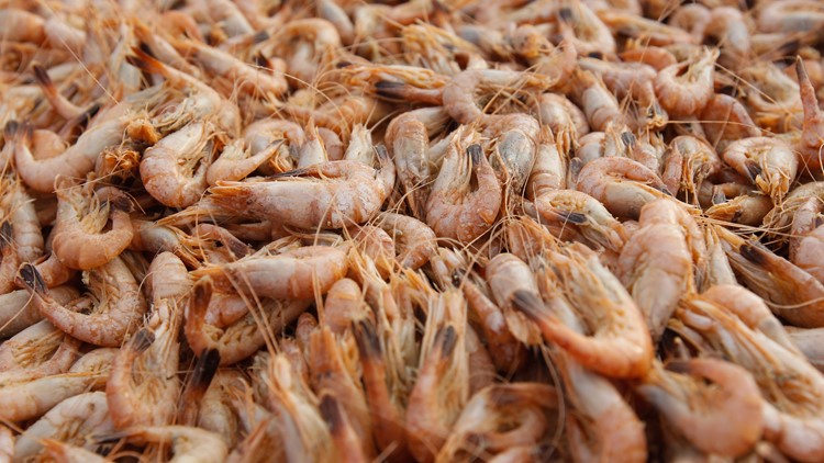 The Texas shrimp industry will lose $1 million a day as a result of the federal cap on U.S. visas for immigrant seasonal workers, according to the executive director of the Texas Shrimp Association.