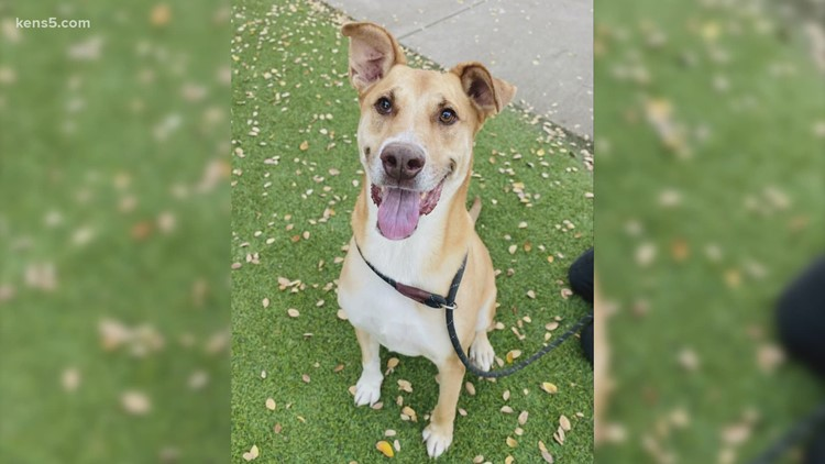 Meet our 'pet of the week' | KENS Cares