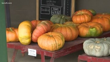 Texas Outdoors: The pumpkin patch is about more than pies!