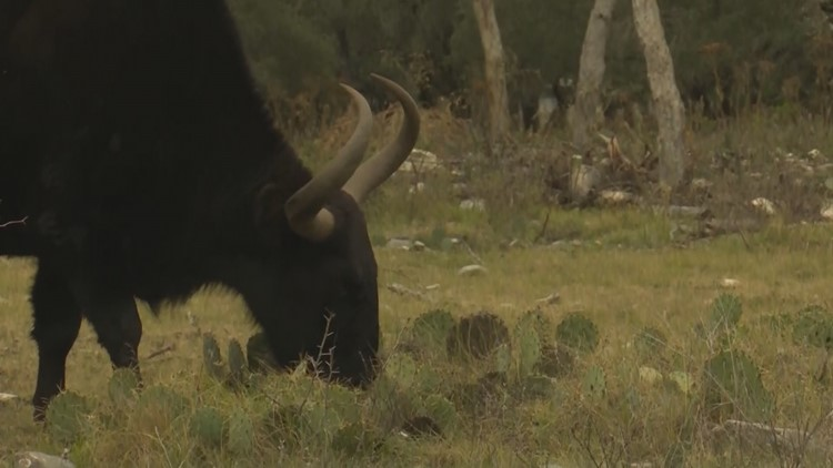 KENS 5 Country: 11,000 acres of Texas-sized adventure