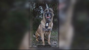 Mission S.A.: Organization gives military dogs second chance