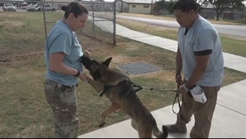 Mission SA: Healing our nation's four-legged heroes