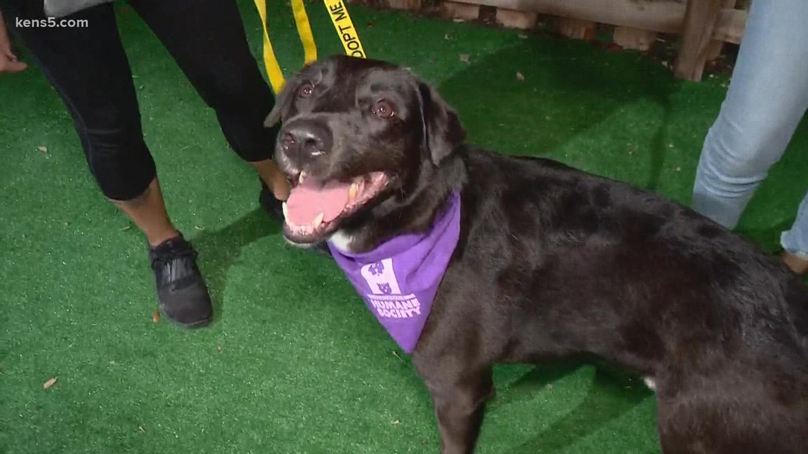 Pet of the week: Lucas, who loves belly rubs, could be yours 🐶