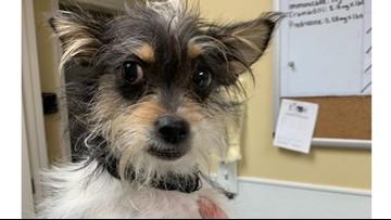 San Antonio Pets Alive! needs pet food, fosters