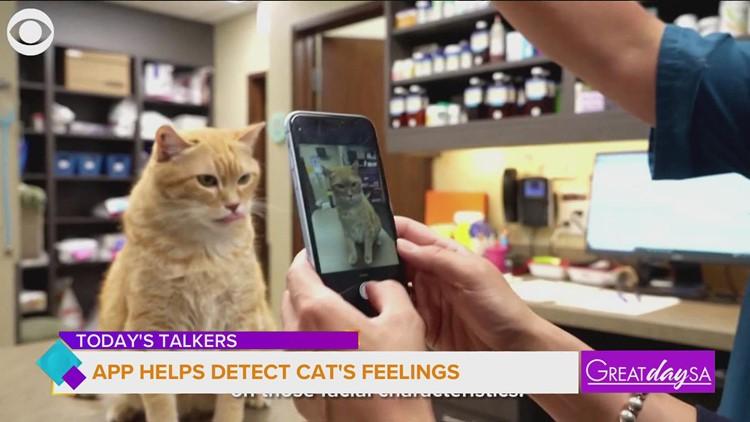 This app helps detect cat's feelings