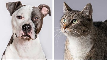 KENS CARES: Paws for Celebration supports SA Pets Alive! rescue programs