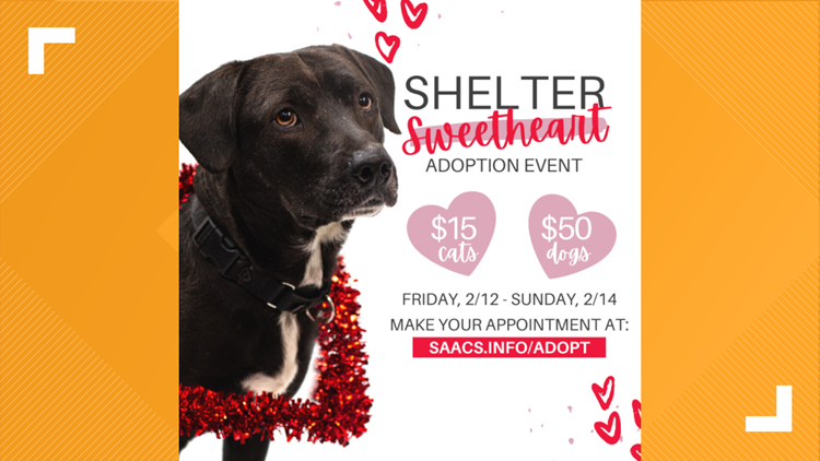 How to adopt a furry friend for a discount this Valentine's Day weekend