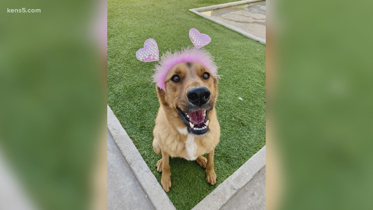 Looking for a fur-ever friend?