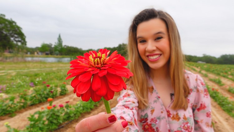 Pick your own Zinnias, Sunflowers 🌻 George Farms in Poteet holds fun, outdoor events