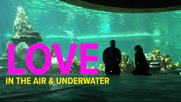 Meet the swimming love birds of Sea World San Antonio