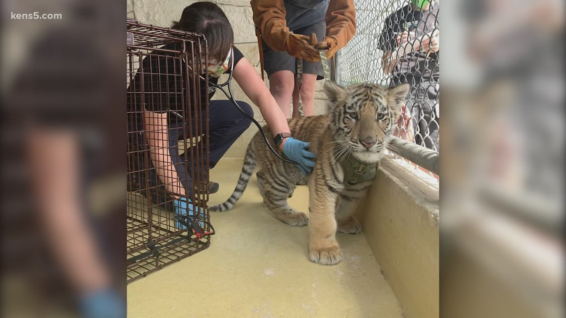 San Antonio Zoo helps local law enforcement care for and rehome seized exotic animals
