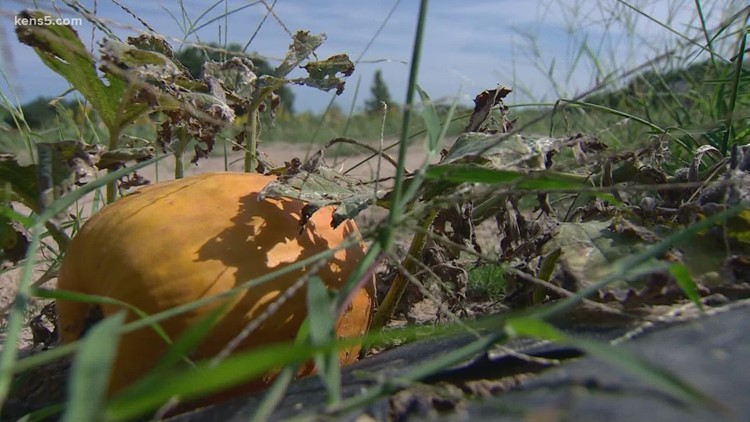 Fall is in the air and on the ground at George Farms Pumpkin Patch   Texas Outdoors 🎃