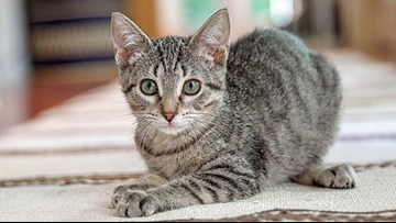 These San Antonio-based kittens are up for adoption and in need of a good home