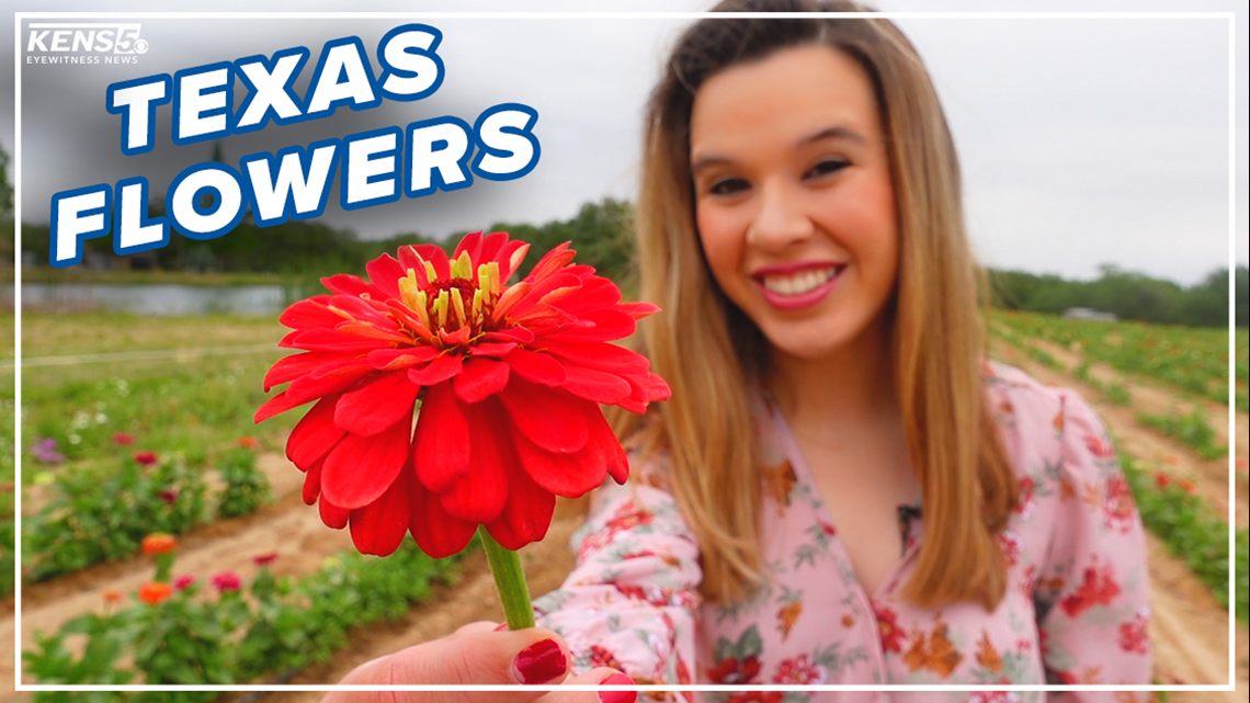 Pick your own Zinnias, Sunflowers 🌻 Texas farm holds fun, outdoor events