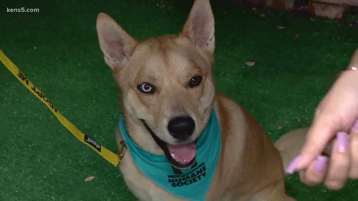 Pet of the week: Meet Luey | KENS Cares